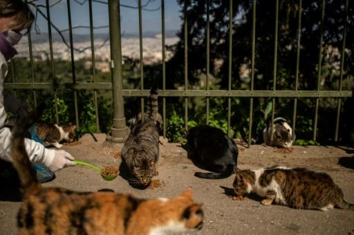 European authorities are realising that allowances must be made for populations of stray animals