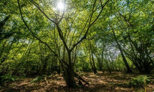 'Betrayal of trust': HS2 criticised over removal of woodland soils