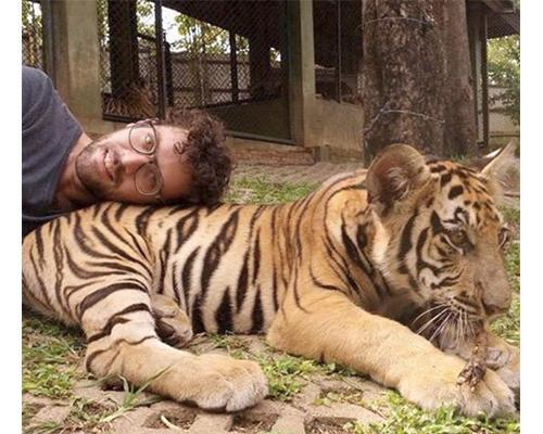 Man lying on back of young tiger
