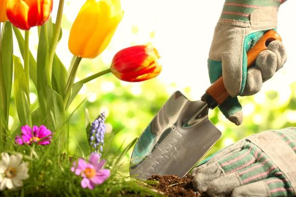 A gloved hand with a garden shovel planting flowers.