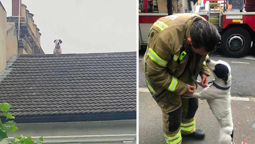 The firefighters rescued the lucky dog. (London Fire Brigade)