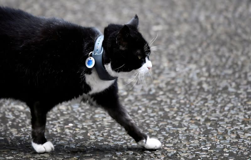 FILE PHOTO: Palmerston, the Foreign Office cat, is seen outside Downing Street in London