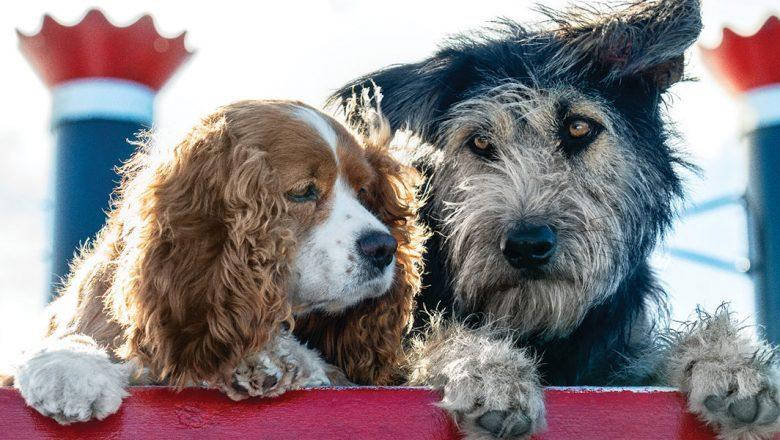 Real dogs star in the live-action remake of Disney's 'Lady and the Tramp'