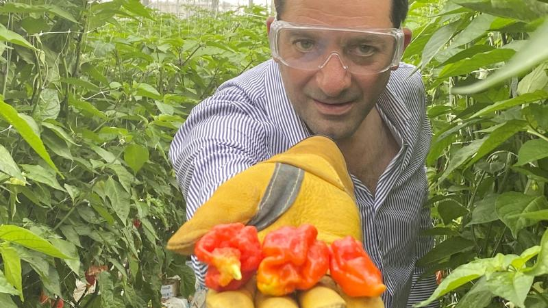 Super-spicy chillies hit the shelves amid red-hot lockdown demand