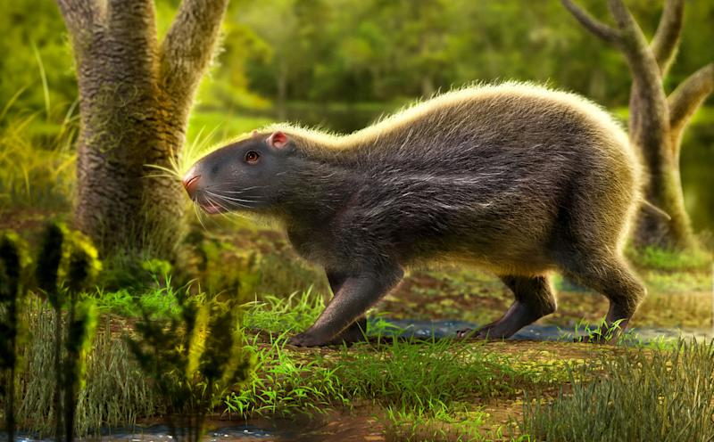 The vast rodent roamed the Amazon (SWNS)