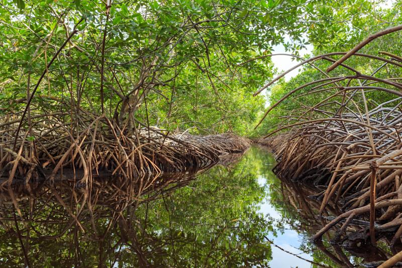 Much of the island of Utila in Honduras is swampy jungle. (Photo: Patrick Dussault)