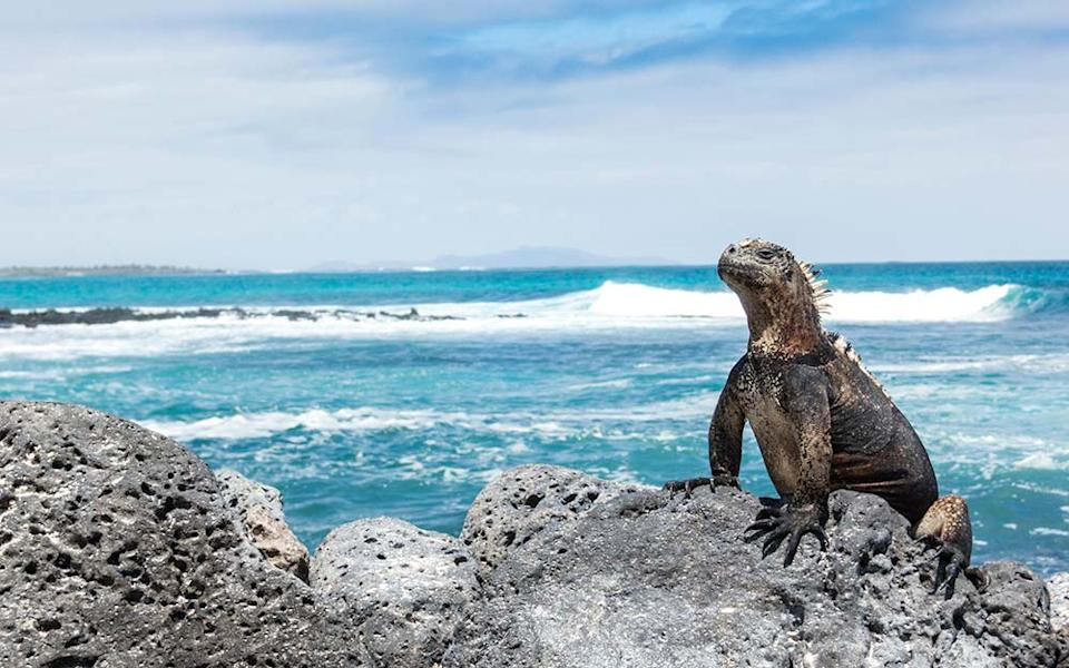 """The Galapagos Islands, """"home to creatures found nowhere else, and I enjoyed countless close encounters unlike any other"""""""