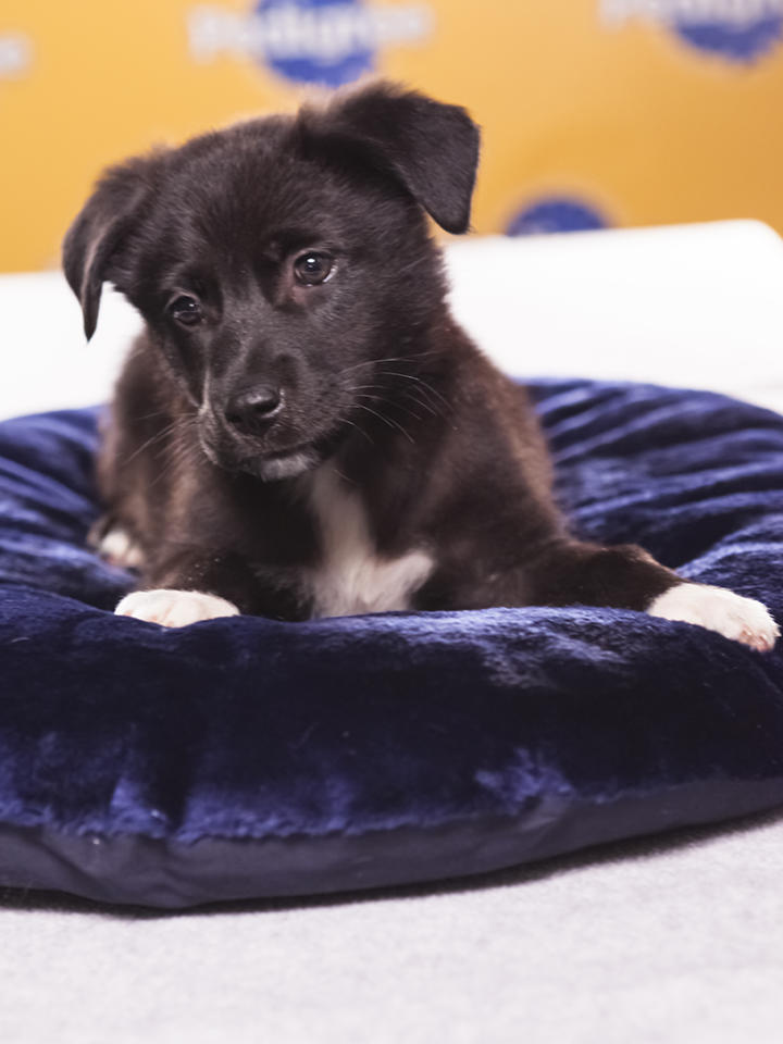 Name: Magnolia