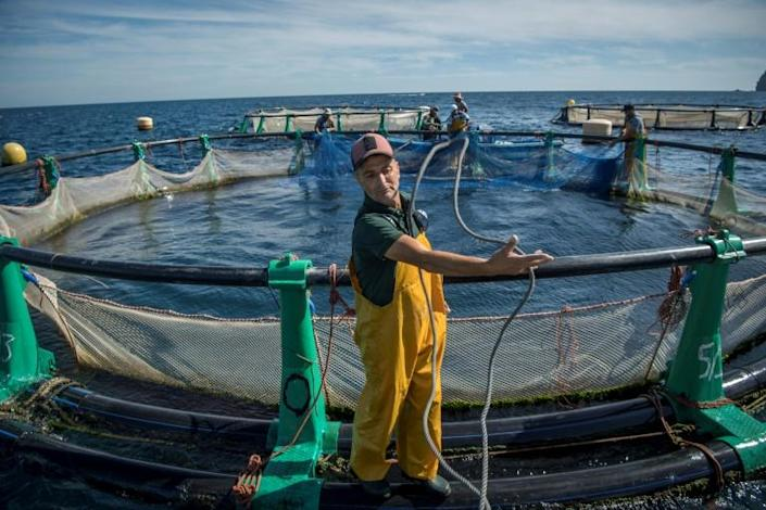 Aquaculture offers hope to struggling fishermen in the Moroccan city of M'diq (AFP Photo/FADEL SENNA)