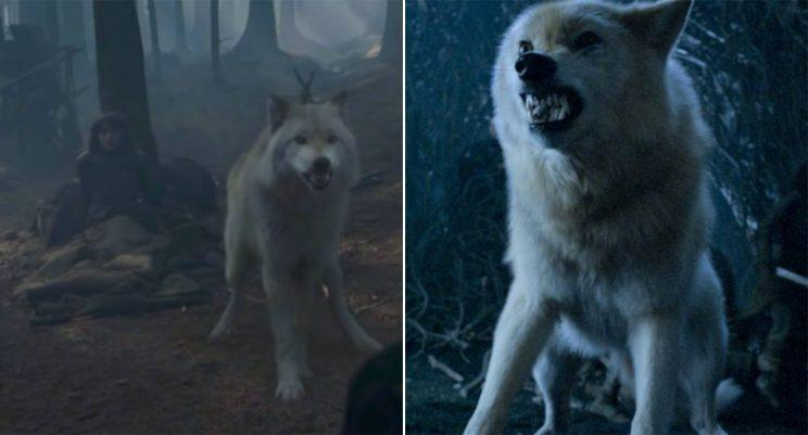 game of thrones direwolves