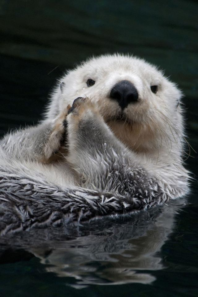 <p>It's hard to believe anyone could be terrified of critters as adorable as otters, but that's exactly what lutraphobia is. It doesn't usually come out of nowhere, though: Most people who fear otters have either been attacked or bitten by one, or have seen it happen to someone else.</p>