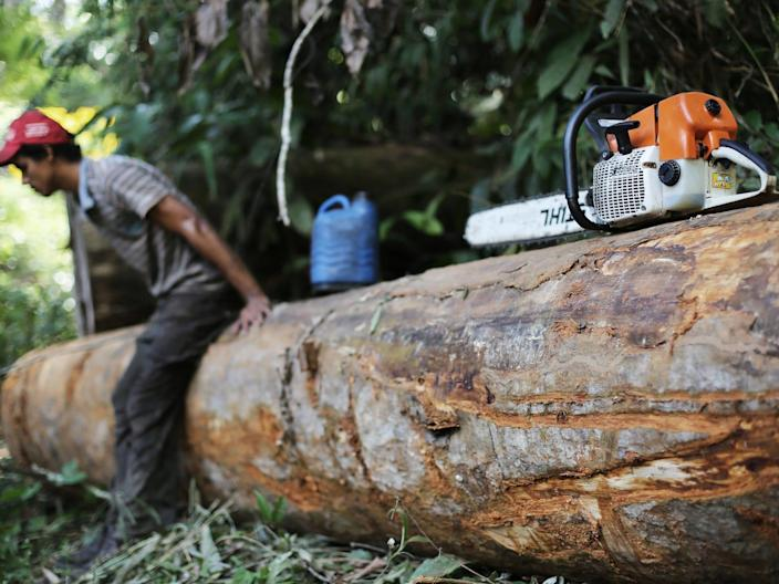 amazon rainforest logging chainsaw