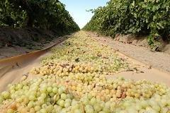 Farmers raisin' hell over 'Raisin Reserve'