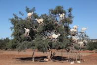 "<p>Argan oil production in Essaouria, Morocco // December 17, 2016</p><p><strong>RELATED: </strong><a href=""https://www.redbookmag.com/life/a50645/most-instagrammable-cities-summer-trips/"" rel=""nofollow noopener"" target=""_blank"" data-ylk=""slk:8 Instagrammable Places to Visit This Summer"" class=""link rapid-noclick-resp""><strong>8 Instagrammable Places to Visit This Summer</strong></a></p>"