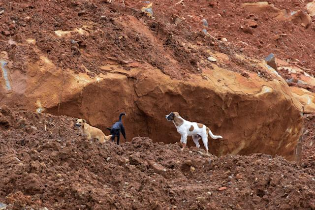<p>Dogs roam along the mud and debris days following the partial collapse of a hillside that swept away hundreds of homes in a neighborhood of the capital Freetown on Aug. 19, 2017.<br> (Photo: Seyllou/AFP/Getty Images) </p>