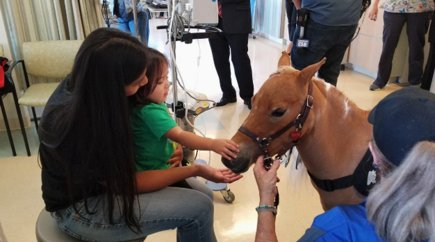 A mini-horse named Hope visits children at the Kaiser Permanente Medical Center in Roseville, Calif. (Photo: Marlei MartinezVerified account via Twitter)