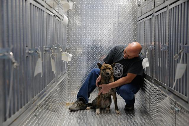 <p>Pittsburgh Aviation Animal Rescue Team (PAART) volunteer David Manko sits on board PAART's Transport Trailer with a dog rescued from a South Korean dog meat farm by Humane Society International (HSI) on Sunday, March 26, 2017, in New York. HSI reached an agreement with the farmers to permanently close the farm and fly all the dogs to the United States for adoption. This is the seventh dog meat farm the organization has closed in South Korea so far, saving more than 800 dogs as part of its campaign across Asia to end the killing of dogs for consumption. (Andrew Kelly/AP Images for Humane Society International) </p>