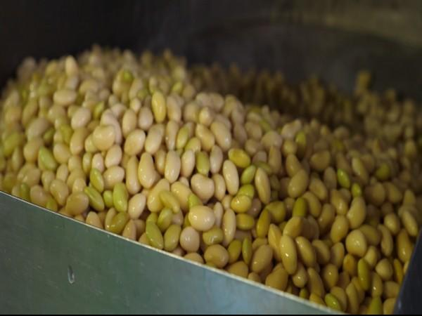 Soybean, a popular ingredient of Japanese cuisine