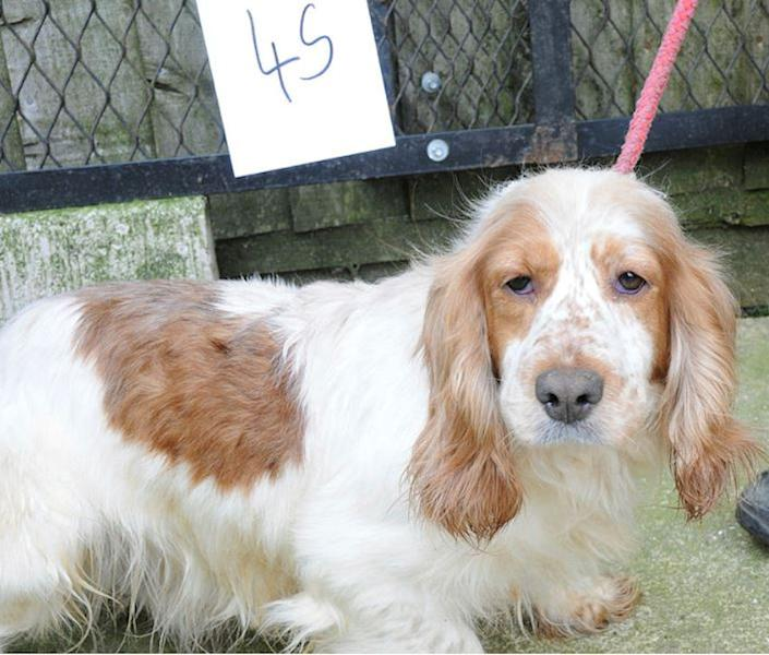 Undated Suffolk Police handout photo of a suspected stolen dog that police want to reunite with their owner. Issue date: {idow} {imnn} {iday}, {iyr4}.