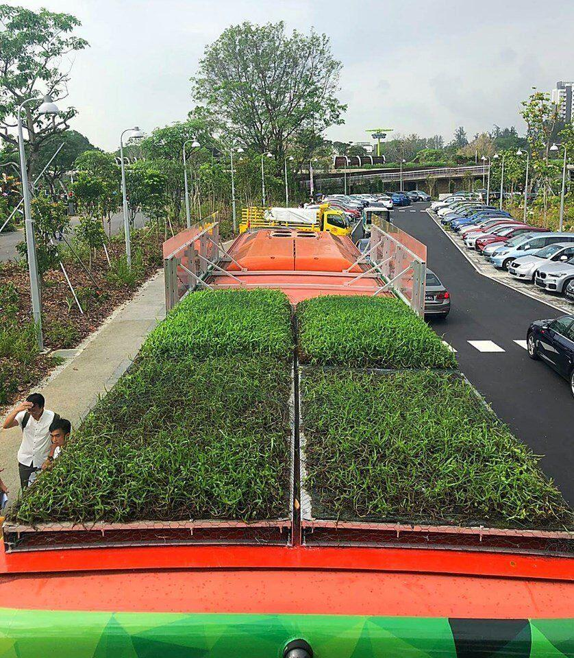 """The rooftop garden on top of an SBA Transit bus, part of the """"Garden on the Move"""" initiative to study possible energy and cost savings for bus operators. (PHOTO: Facebook/Singapore Green Building Council)"""