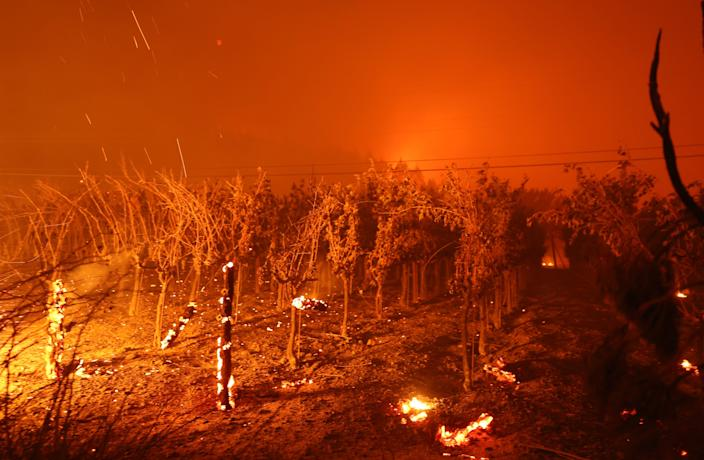 ST. HELENA, CALIFORNIA - SEPTEMBER 27: Grape vines at Chateau Boswell Winery burn as the Glass Fire moves through the area on September 27, 2020 in St. Helena, California. The fast moving Glass fire has burned over 1,500 acres and has destroyed homes. Much of Northern California is under a red flag warning for high fire danger through Monday evening. (Photo by Justin Sullivan/Getty Images) ***BESTPIX*** ORG XMIT: 775568437 ORIG FILE ID: 1277061469