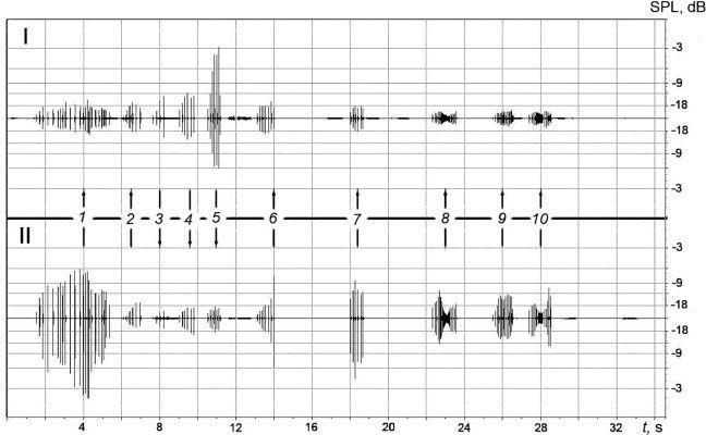 Example of the recordings displaying the sequence of the NP packs produced by Yana (down arrows) and Yasha (up arrows). Photo: Science direct