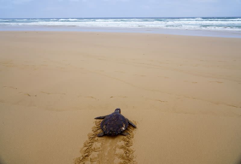 Turtle released to sea after months recovering