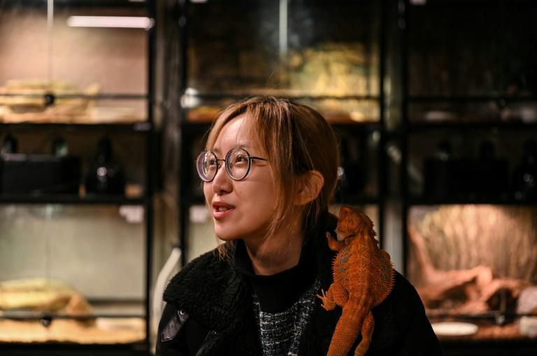 A bearded dragon perches on a customer's shoulder at a reptile coffee shop in Shanghai