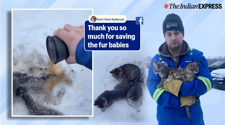 Frozen kitten, Frozens kitten rescue, Man rescues frozen kitten with coffee, Trending, Indian Express news