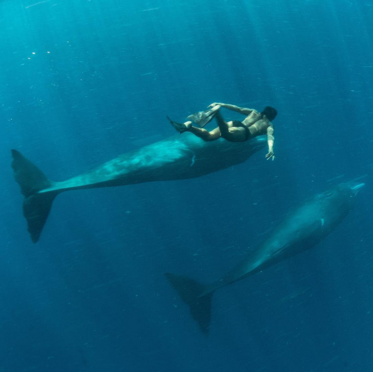 <p>To swimming with sperm whales in Dominica. </p>