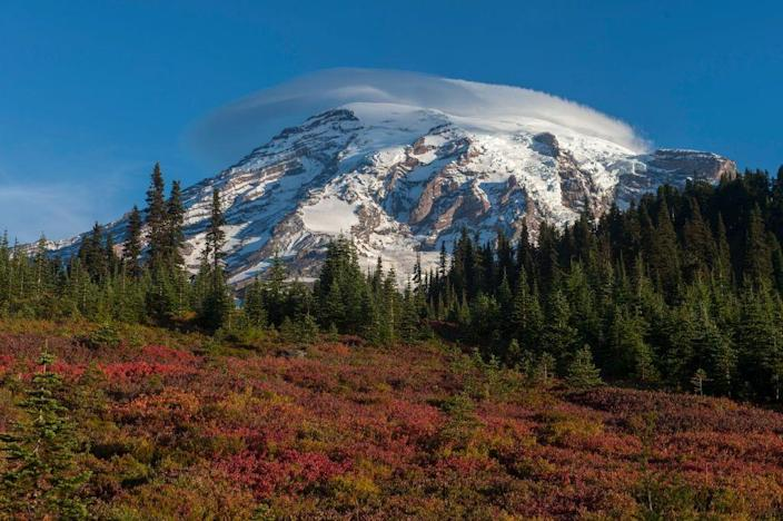 <p>Fall leaves explode with colors in Mount Rainier National Park, Washington. // September 25, 2016</p>