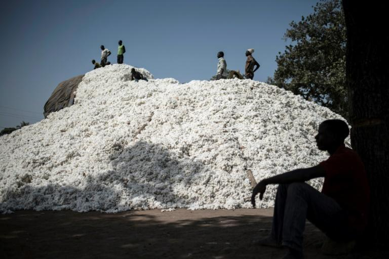 Harvest time: Togo and Benin are looking to cotton to create jobs in their agriculture-dependent economies