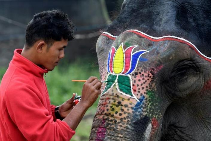 Elephants at Nepal's annual elephant festival are judged on how well they are decorated and groomed -- as well as being checked for signs of beatings (AFP Photo/PRAKASH MATHEMA)