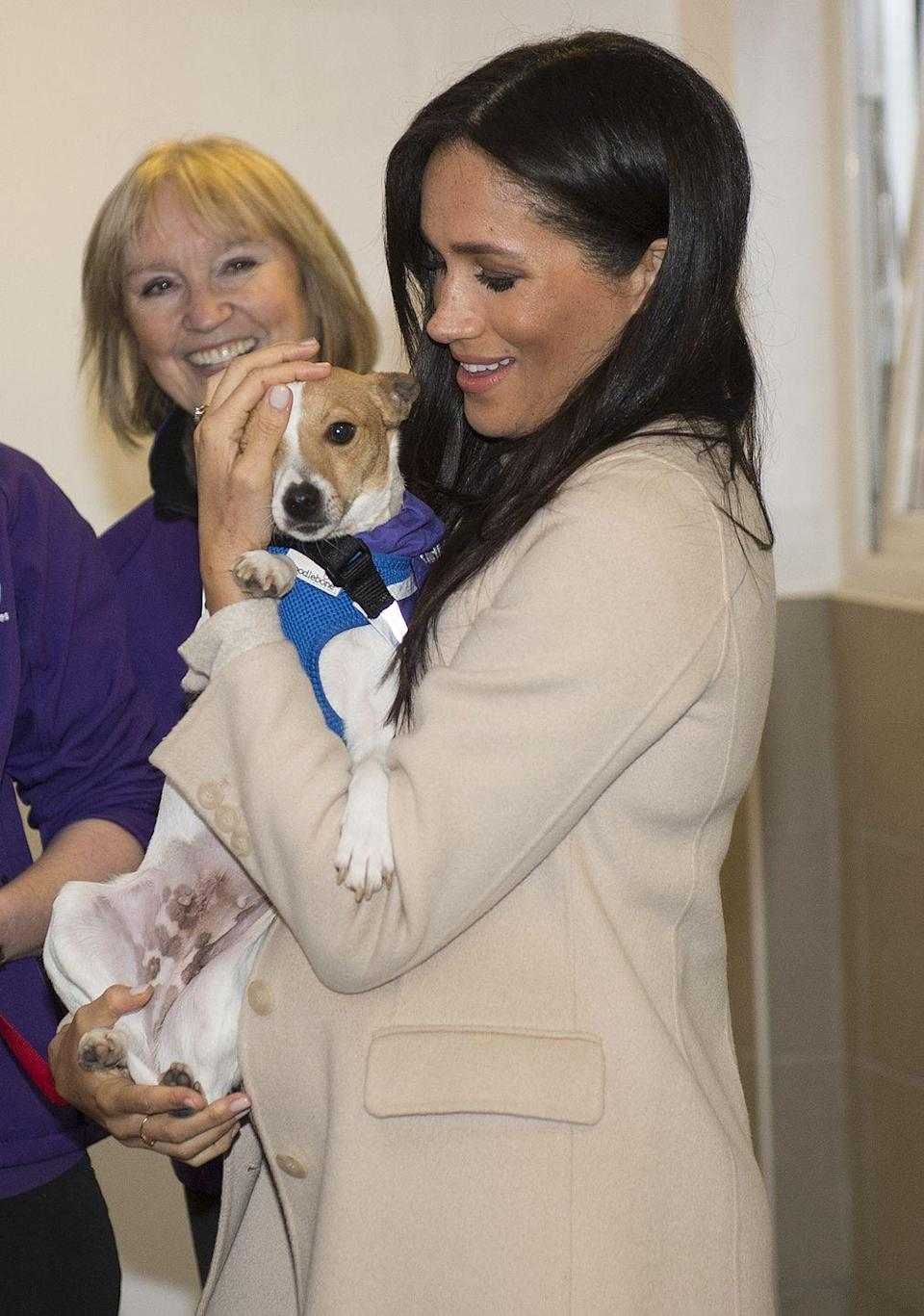 """<p>Meghan Markle meets a Jack Russell named Minnie during her visit to the Mayhew, an animal welfare charity of which <a href=""""https://www.townandcountrymag.com/society/tradition/a25835910/meghan-markle-royal-patronages-charities/"""" rel=""""nofollow noopener"""" target=""""_blank"""" data-ylk=""""slk:she is now patron"""" class=""""link rapid-noclick-resp"""">she is now patron</a>.</p>"""