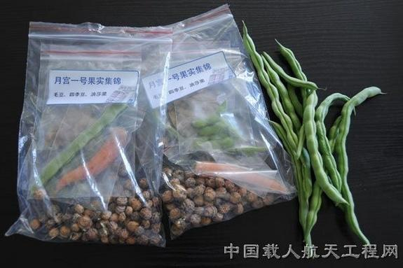 No moon pies grown in China's Lunar Palace 1. Shown here are plants cultivated within the test facility
