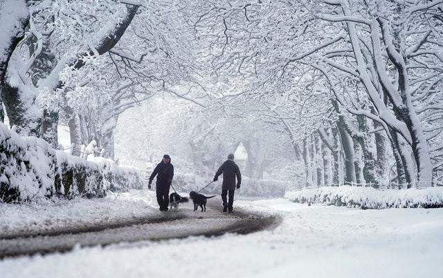 Dog walkers negotiate overnight snow