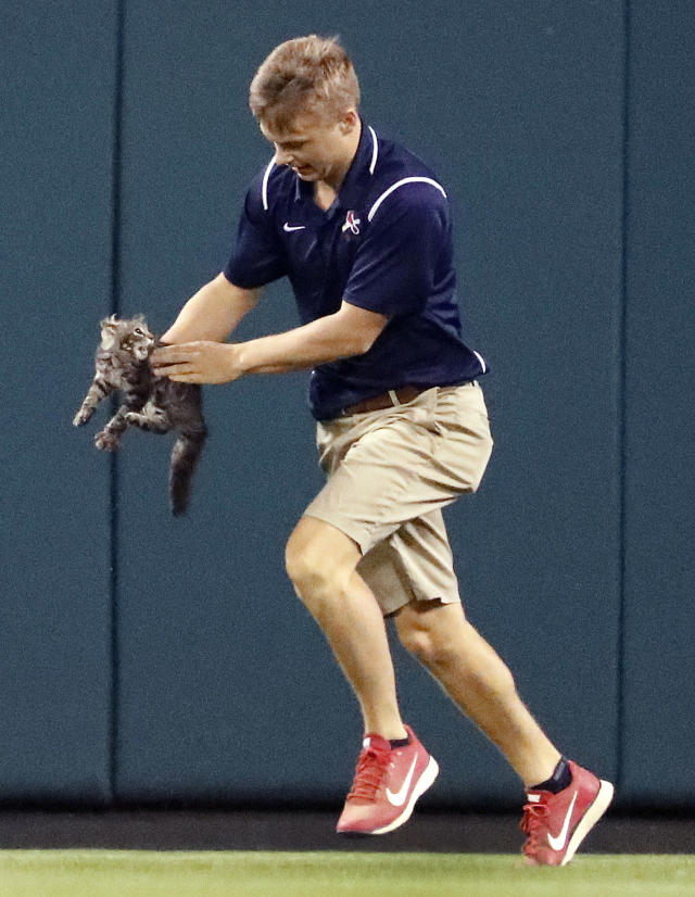 <p>A member of the Busch Stadium grounds crew removes a cat that had run onto the field during the sixth inning of a baseball game between the St. Louis Cardinals and the Kansas City Royals on Wednesday, Aug. 9, 2017, in St. Louis. (AP Photo/Jeff Roberson) </p>