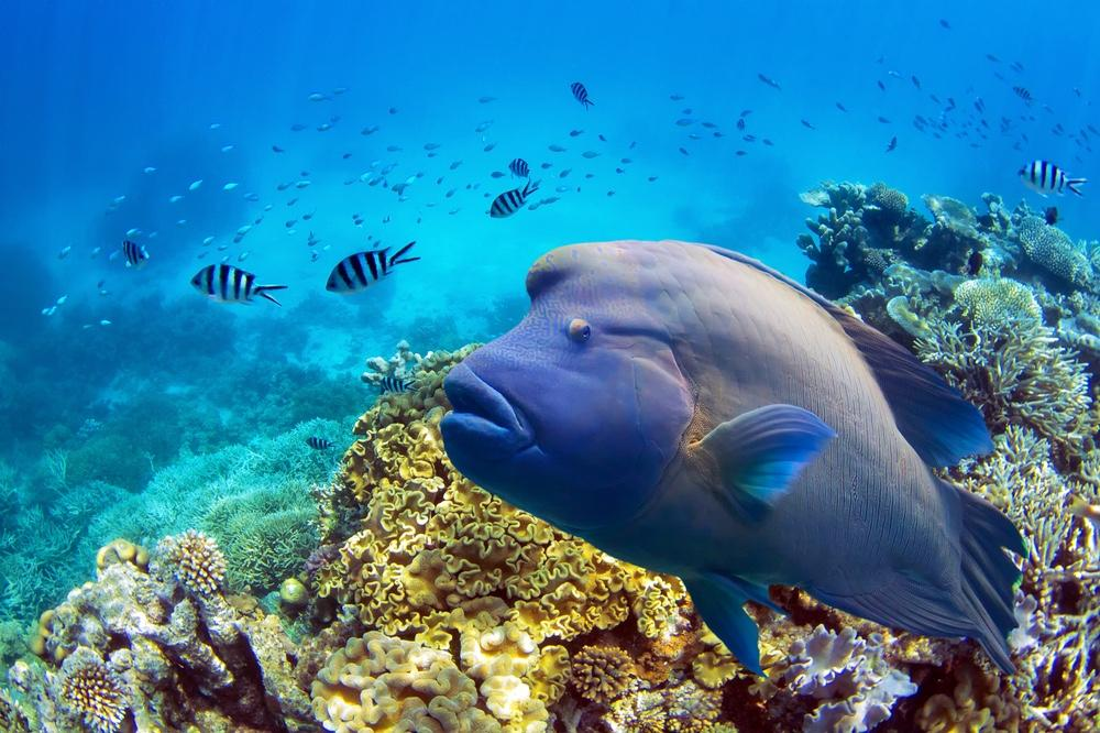 The Great Barrier Reef supports plenty of tour-dive companies and commercial fishing outfits.