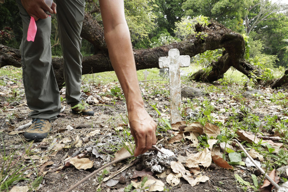 Dumas Galvez, a researcher of the Smithsonian Tropical Research Institute, leaves oats for ants at the French Cemetery in Paraiso, Panama, Tuesday, March 30, 2021. After a year, Panama has loosened its COVID-19 pandemic restrictions and the Smithsonian is in the process of reopening its facilities there, so Galvez has been able to do fieldwork and supervise students. (AP Photo/Arnulfo Franco)