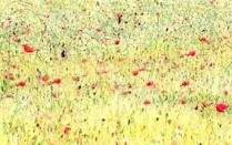 <p>Poppies by Giuseppe Bonali (Northern Italy).</p>