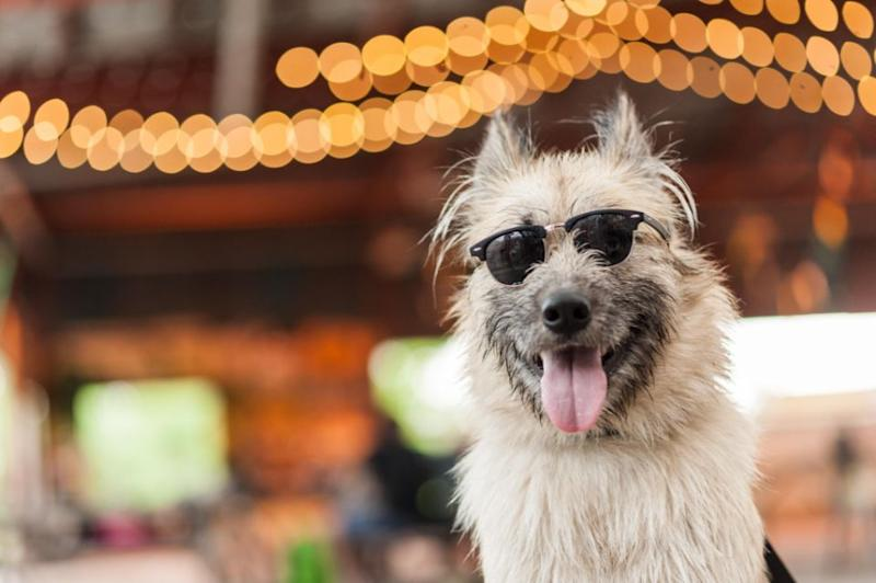 All the cool dogs will be seen here.