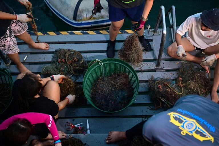Sea creatures have less than a 10 percent chance of survival when they get caught in nets, the director of Thailand's marine park management agency says