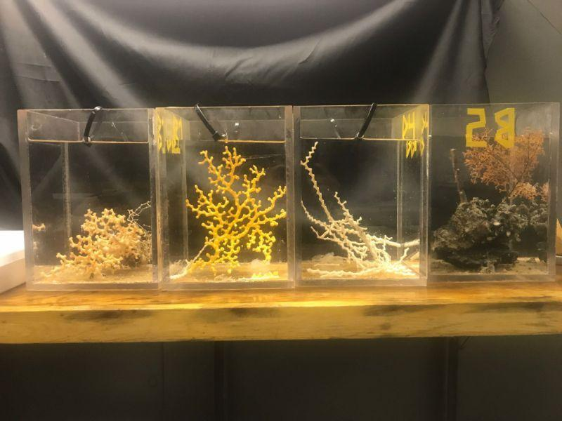 Different species of corals sit in tanks aboard the R/V Atlantison Saturday. (Chris DAngelo/HuffPost)