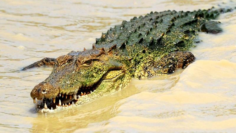 Seven people were treated in England for attacks by crocodiles or alligators in a year