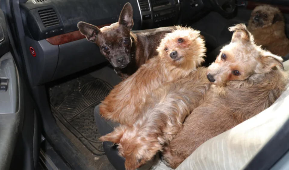 A total of 22 dogs have been reunited with their owners so far. (Y Byd ar Bedwar/Wales News Service)