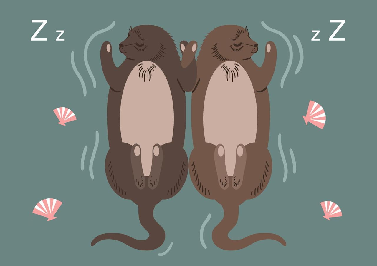 What's your sleep spirit animal? 10 weird and wonderful