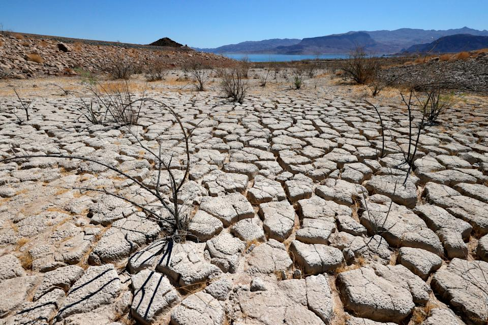 Lake Mead is seen in the distance behind mostly dead plants in an area of dry, cracked earth that used to be underwater near Boulder Beach on June 12.