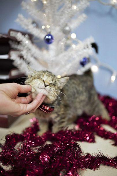 PHOTO: Ilene the kitten was found wrapped in a pile of trash by a good Samaritan in California and brought to the Oregon Humane Society. (Oregon Humane Society)