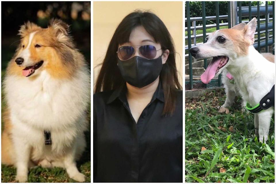 Charlotte Liew (centre), owner of pet hotel Platinium Dogs Club, was 2 weeks for failing to ensure that an animal is provided with adequate and suitable food and water. At least two dogs died following stays at the Pet Hotel.