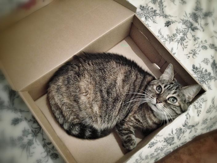 Cat inside box